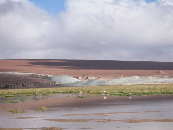 Expedición Volcán Ojos del salado 2008